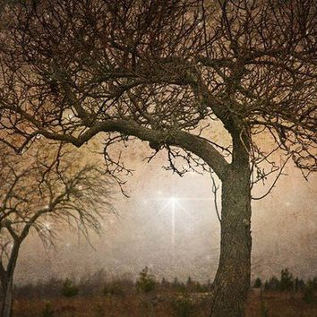 Tree Faeries 8x12 Fine Art Photograph by judemcconkey on Etsy