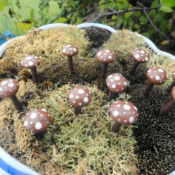 beautiful set of 24 little brown mushrooms terrarium patio fairy garden woodland 1 inch tall toadstools shrooms