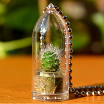 Snow White Cactus Plant Live Terrarium Necklace. Nature Jewelry. Variety Chain Selection.