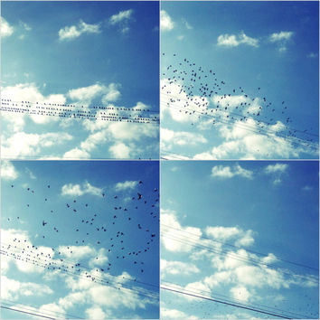 BIrd Photo Set of 4 - Birds on a Wire - Flock of Birds - Fine Art Photography - Blue Sky, Black Birds, White Clouds - Wall Art Prints
