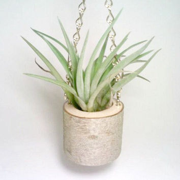 Hanging Air Plant Holder, Rustic Air Plant Holder, Tillandsia Container, Log Flower Pot