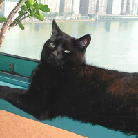 Lazy Afternoon Black Cat Note Cards, Set of 5