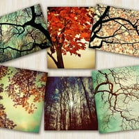 Tree Photography, home decor, nature prints, autumn color, Forest For The Trees - 6 art prints set  - 5x7 and 5x5