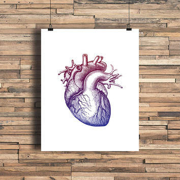 Anatomical Heart Ombre Red and Blue - Art Print -Love-Vintage Engraving - Home - Office Decor - Housewarming Gift - Wedding Gift - Dorm Room