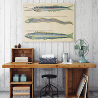 Fish Poster| Sea Life Art| Taxonomy Wall Art| Fishes Wall Art| Fishes Print| Animal Poster| Natural History| Vintage Zoology| HAP011