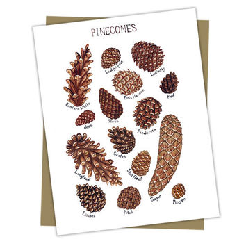 Pine Cones Field Guide Nature Card
