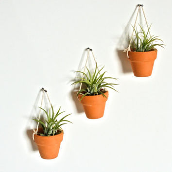 Three Mini Hanging Ceramic Pots with Air Plants, Pottery Hanging Planters, Hanging Airplant Planters, Hanging Pottery Planters, Wall Decor