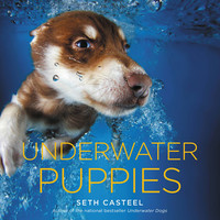 Underwater Puppies Hardcover – September 16, 2014