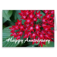 Red Egyptian Star Flowers Anniversary Greeting Card