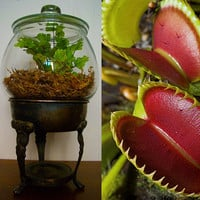 Carnivorous plant upcycled silver pedestal by hammersheels on Etsy