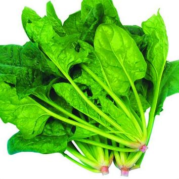 Hot Spinach seeds versatile organic vegetable 200pcs Spinach Seeds Salad Leaves Good Taste Non-GMO DIY Home Garden Plant