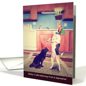 Bailey the Dog Balancing a Cake on her Nose for Birthday card