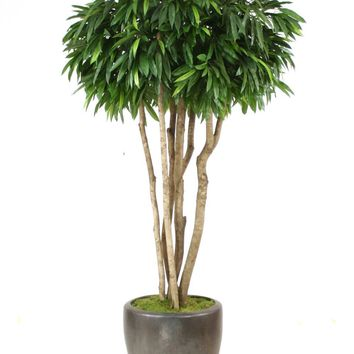 8' Canopy Mango Tree In Metallic Bronze Stoneware Pot