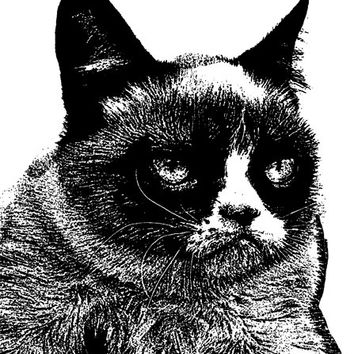 angry mad grumpy cat face PNG Digital Image Download pets animal art graphics abstract impressionist illustration