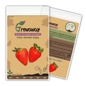 Fruit seeds Organic 200pcs Giant Strawberry Seeds RARE Fragaria Ananassa Huge Fruit,new packing !