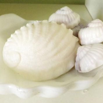 Seashell Soaps- You Choose the Style: Abalone Shell, Starfish, or 7 Nautilus Soaps; Guest Soaps, Mother's Day Present, Beach Cottage