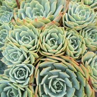 Succulents Love Stretched Canvas by RichCaspian | Society6