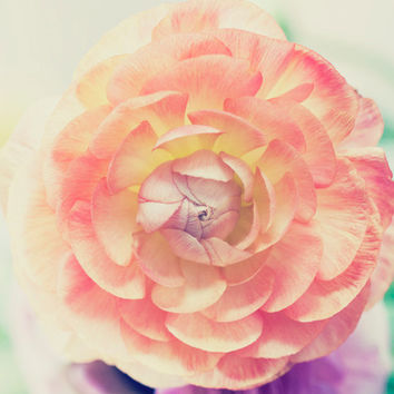 Ranunculus Photo Print - Whimsical Dreamy Flower Photo - Peach Pink Flower - Fine Art Photography