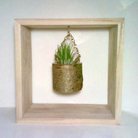 Hanging Terrarium, Shadow Box Picture Frame,  Rustic Picture Frame, Succulent Planter, Air Plant Holder
