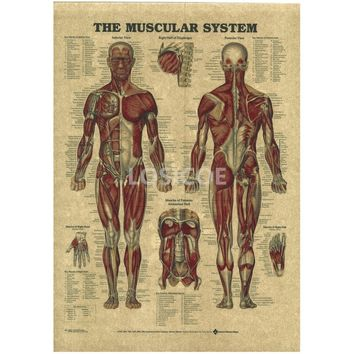 Vintage Medicine Human anatomy Posters Kraft Paper Painting Wall Sticker Print Art Hospital Classrooms Interior Decoration 30x42