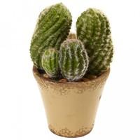 Cactus Garden With Ceramic Planter