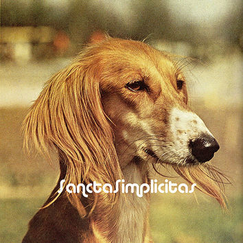 Saluki (Arabian Greyhound) Antique Illustration Digital Download Printable Image no. 098