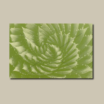 Anthotype Green Canvas Wall Art Print. Spiral Anthotype Wall Decor Piece for your Prints Ideas.