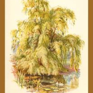 Weeping Willow: Fine art canvas print (12 x 18)