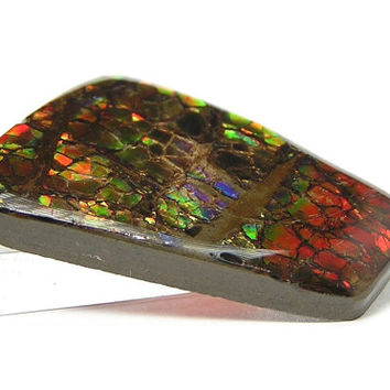 Ammolite Ammonite Rainbow Iridescent Fossil Opal-Like Rare Organic Gemstone Prehistoric Life from the Primordial Sea of Alberta Canada