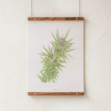 Blue Dream Botanical Illustration Print