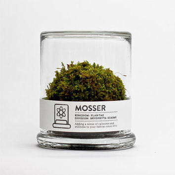$26.00 MOSSER scientific glass moss terrarium & spray bottle by themosserstore