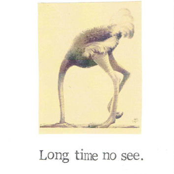 Long Time No See Ostrich Card | Funny Animal Nature Humor Keep In Touch Miss You Friends Friendship Hello Thinking Of You
