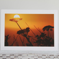 Golden Sunset Photo Greeting Card, Cow Parsnip Before Evening Sky, Setting Sun on Coastal Plant, Pacific Ocean Sunset, Fine Art Photography