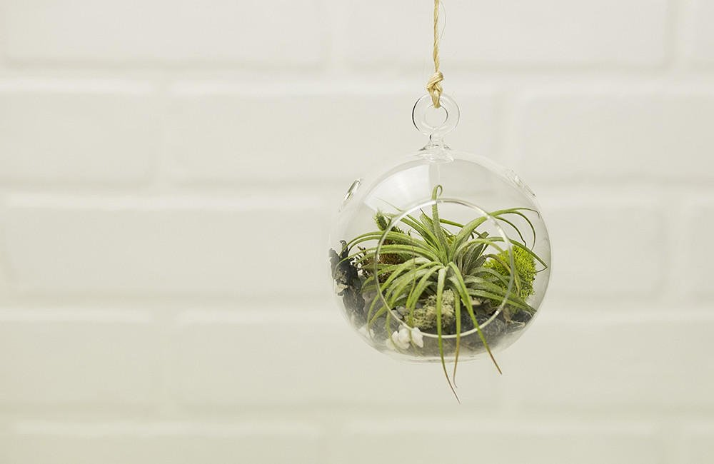 Hanging Air Plant Terrarium Kit from MakersKit  home decor