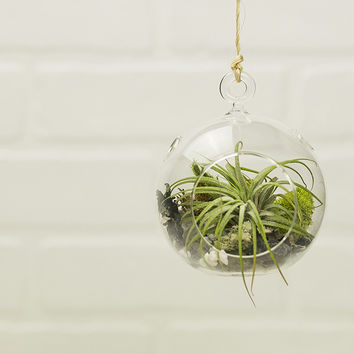 Party 10 Pack - Hanging Air Plant Terrarium Kit