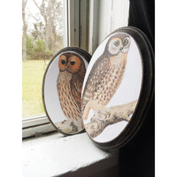 Two (2) Oval Owl Wood Wall Art Wood Canvas