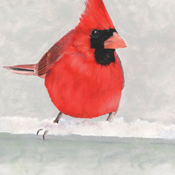 Red Cardinal Bird Print - Garden Wildlife Series - 8x10