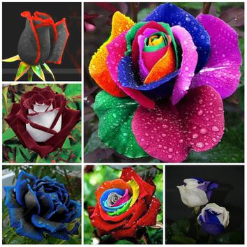 100pcs 24kinds of rare mixcolor rainbow rose flower plants Dragon Rose Bonsai Flowering Plantas For Diy Home Garden & Balcony