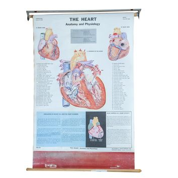 Mid Century Vintage Heart Cram's Science Chart