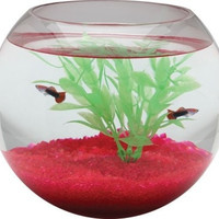 AQUATICS - FISH BOWLS - 1 1/2 GAL GLASS BOWL SPHERE -  - KOLLER PET GROUP - UPC: 49146006507 - DEPT: AQUATIC PRODUCTS
