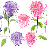 Hand painted watercolor pink and purple chrysanthemum digital clipart printable instant download scrapbook cards invitation