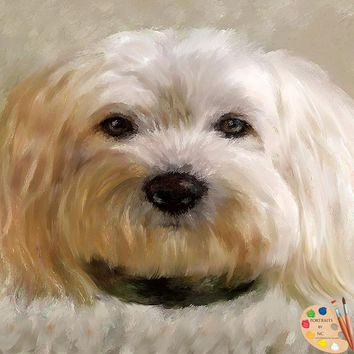 Bichon Frise Dog Portrait 510