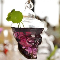Skull  Halloween  Terrarium  Glass  Plant  Flower