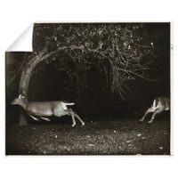 Two white-tailed deer scatter after an automatic f > National Geographic Art Store
