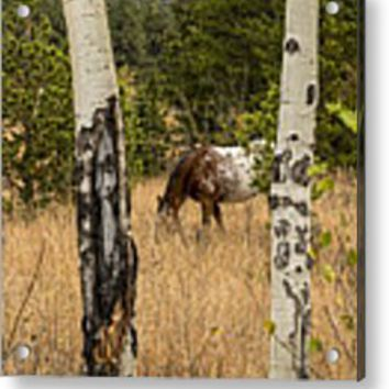 Beautiful Horse Through The Aspen Trees Portrait Metal Print