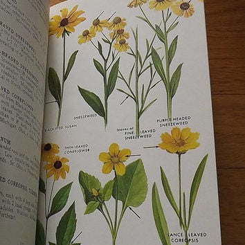 Wild Flowers Book, Vintage Wildflower Field Guide Garden Reference Book by Peterson & McKenny Northeastern Northcentral 1960s Hardback