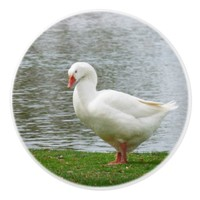 Common Duck Ceramic Knob