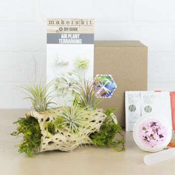 Air Plants & Moss Gift Set