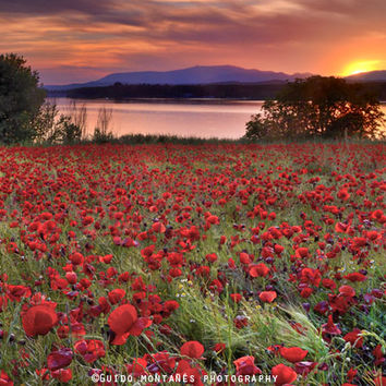 """Sea of poppies"". Sunset at the lake by Guido Montañés"