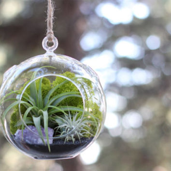 Large Black Sand and Amethyst Cluster Air Plant Terrarium Kit